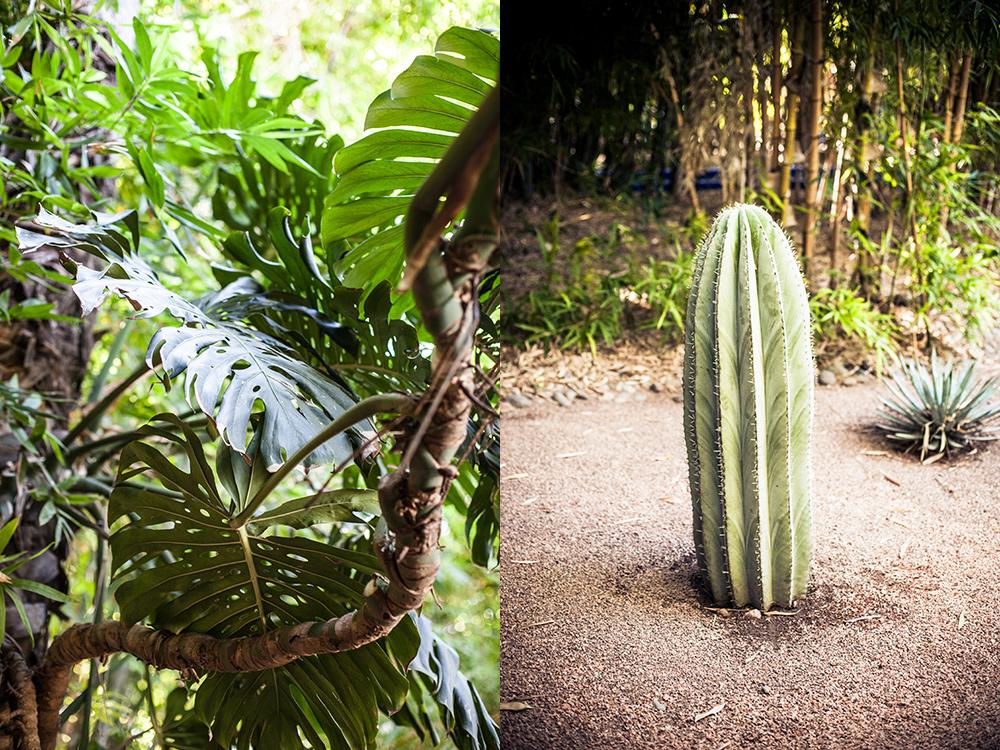Seele baumeln lassen im Jardin de Majorelle