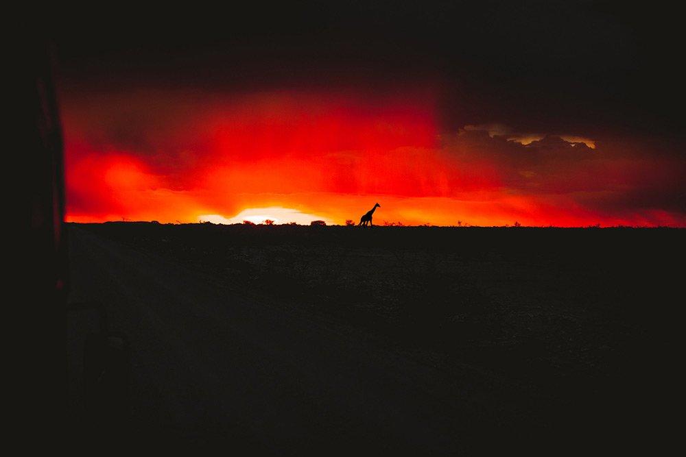 Safari im Etosha Nationalpark