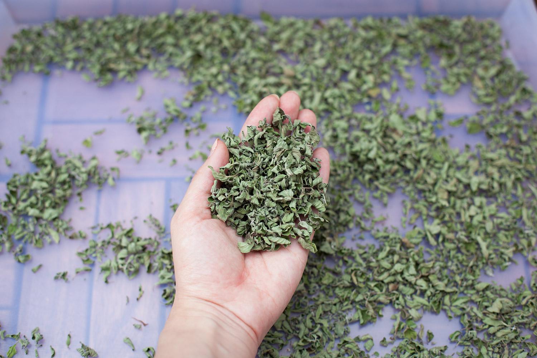 kräuter selber pflanzen (1)