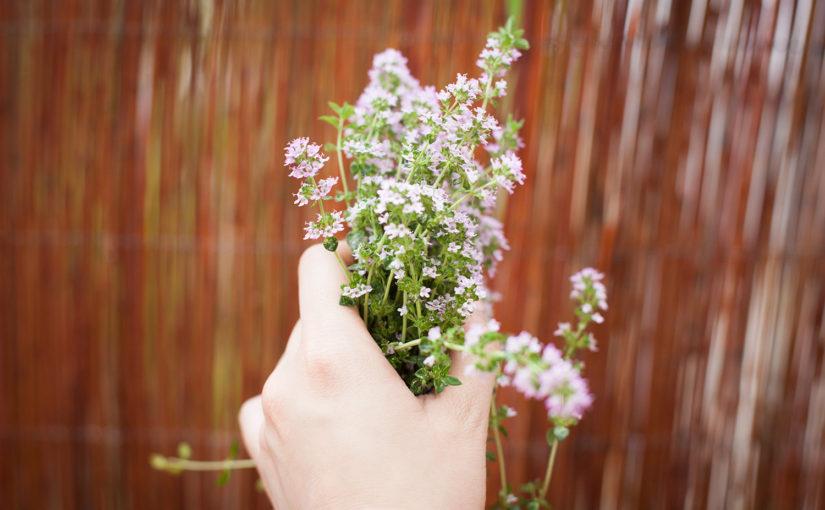 Für Selbstversorger: Kräuter pflanzen und Nutzungsmöglichkeiten