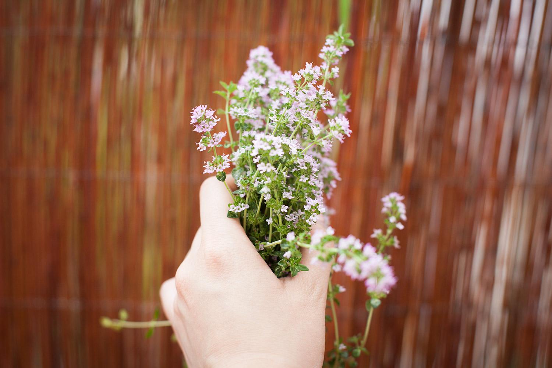 kräuter selber pflanzen (2)