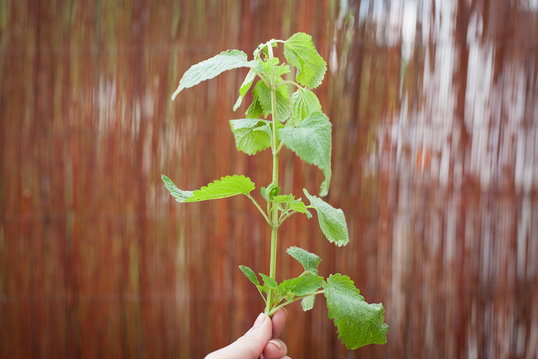 kräuter selber pflanzen (3)