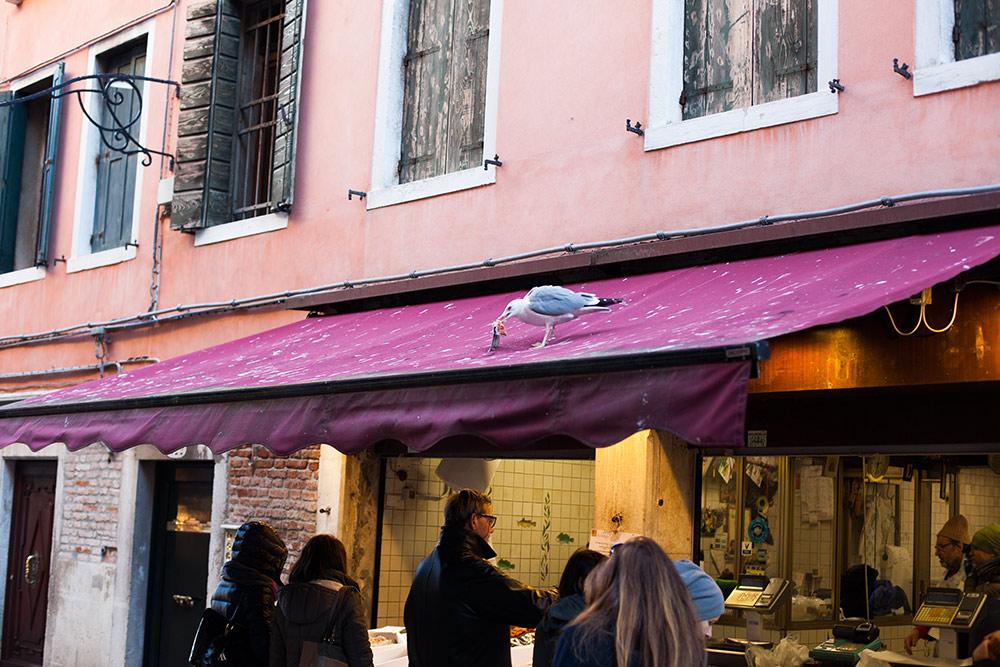 Venedig als Urlaubsziel - 5 Highlights 9